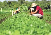 Agroecologia_FazendaRural