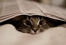 cat-gato-jornal-Favim.com-252717