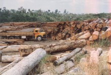 desmatamento-na-amazonia2[1]