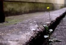 flor_no_asfalto