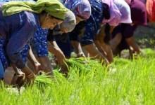 mulheres-no-campo